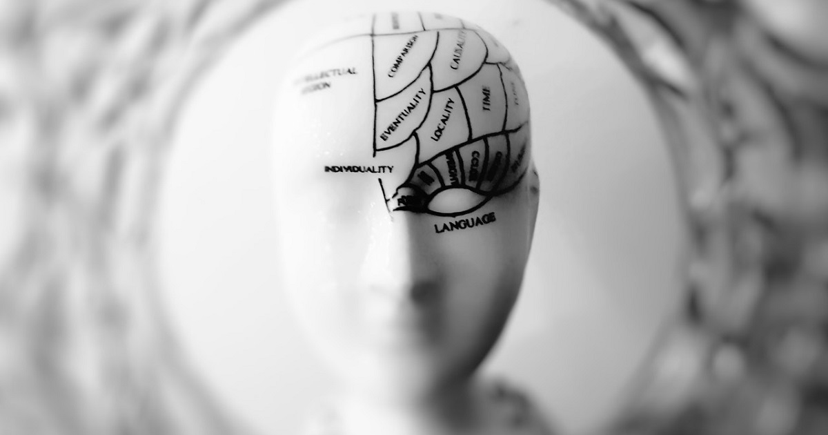 Doll face showing dotted lines representing different parts of the brain