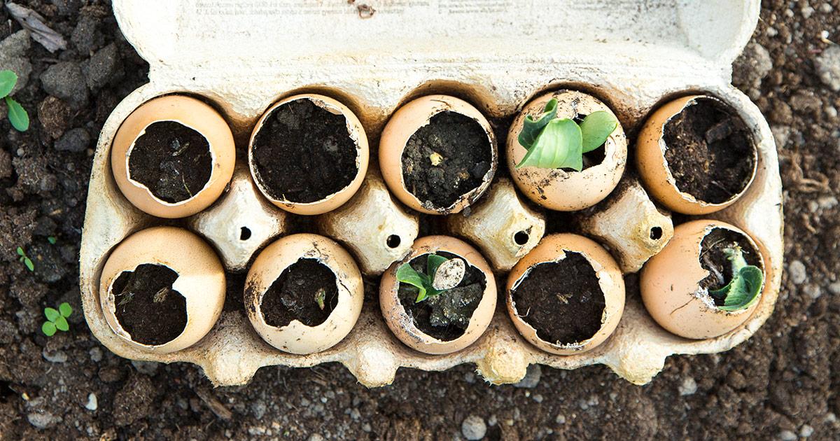 An eggshell herb garden is a great summer project for kids.